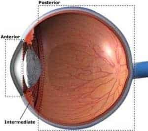 How Turmeric Benefits in Uveitis