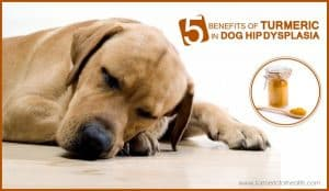 5-benefits-of-turmeric-in-dog-hip-dysplasia