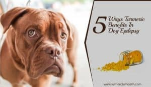5-ways-turmeric-benefits-in-dog-epilepsy