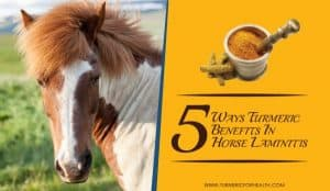 5-ways-turmeric-benefits-in-horse-laminitis