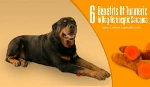 6-benefits-of-turmeric-in-dog-histiocytic-sarcoma