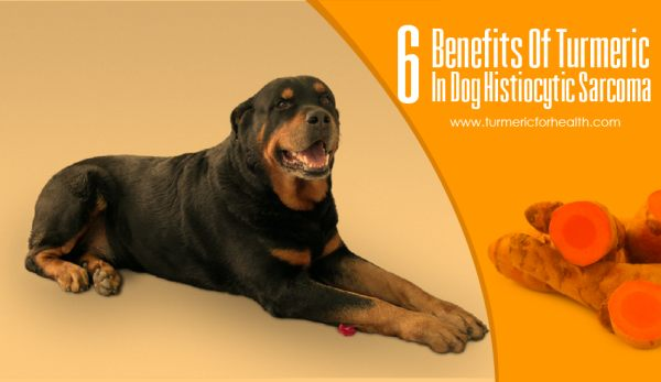 6 Benefits Of Turmeric In Dog Histiocytic Sarcoma