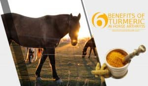 6-benefits-of-turmeric-in-horse-arthritis