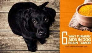 6-ways-turmeric-aids-in-dog-brain-tumor