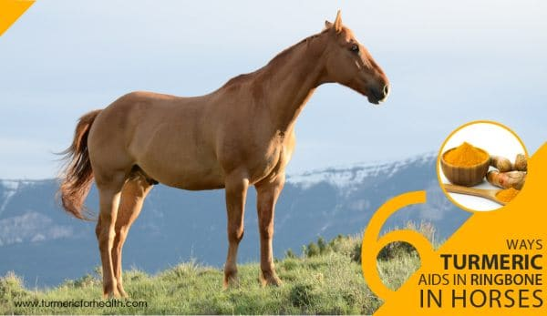 6-ways-turmeric-aids-in-ringbone-in-horses