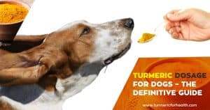 Turmeric Dosage for Dogs – The Definitive Guide