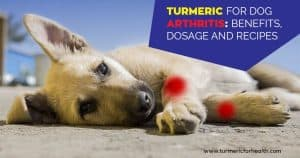 Turmeric for Dog Arthritis 8 Evidence Based Benefits, Dosage and Recipes