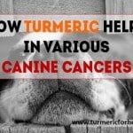 featured canine cancer