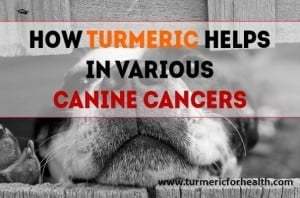 How Turmeric Helps In Various Canine Cancers