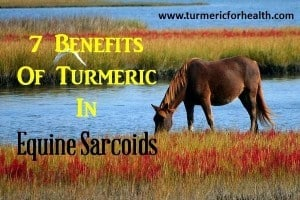 7 Benefits Of Turmeric In Equine Sarcoids