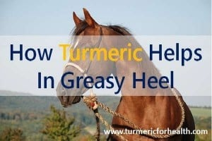 4 Ways Turmeric Helps In Greasy Heel or Mud Fever Naturally