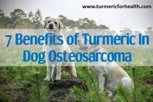 7 Benefits of Turmeric In Dog Osteosarcoma
