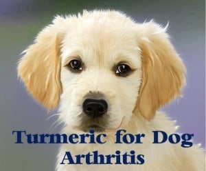 turmeric for dog arthritis